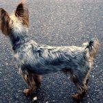 Girlington Dog